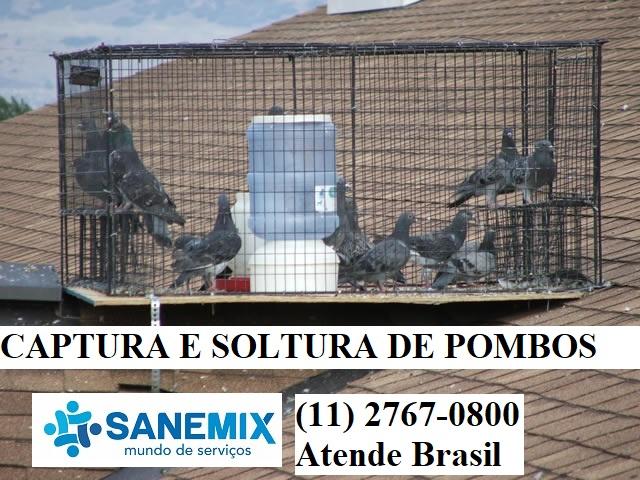 Sanemix