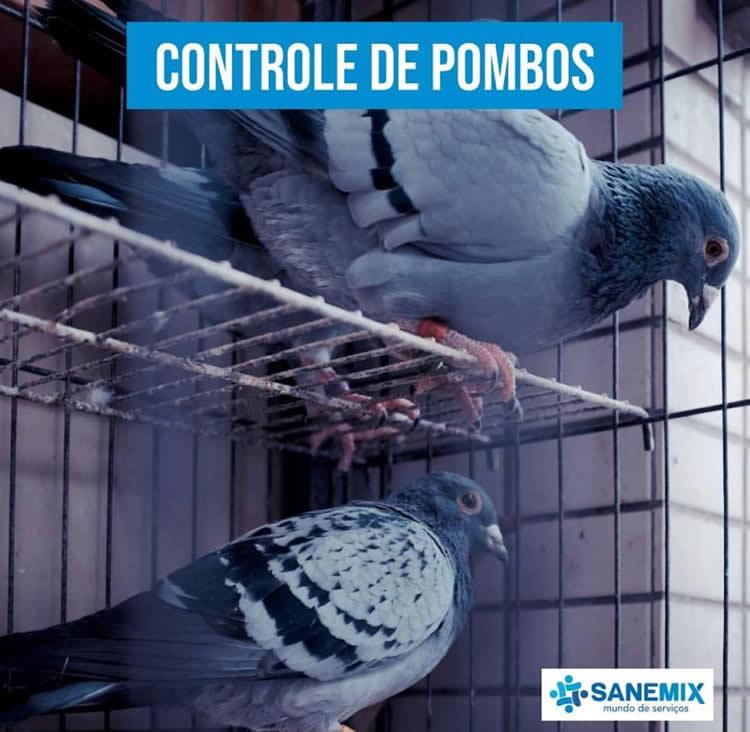 Controle de Pombos Sanemix